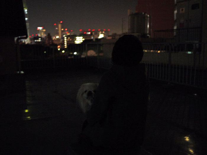 ペキニーズ Blog-白ペキニーズ シロ♂ & 白黒ペキニーズ クロ♀のフォトブログ-2012.12.17.シロ