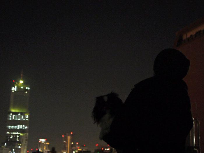 $ペキニーズ Blog-白ペキニーズ シロ♂ & 白黒ペキニーズ クロ♀のフォトブログ-2012.12.17.クロ