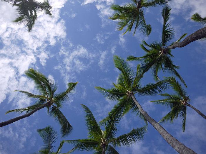 ペキニーズ Blog-白ペキニーズ シロ♂ & 白黒ペキニーズ クロ♀のフォトブログ-2013.6.4.Hawai'i 3