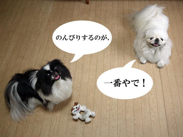ペキニーズブログ-夏の過ごし方。 (2)