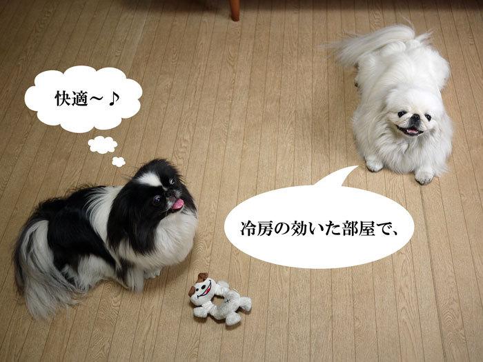 ペキニーズブログ-夏の過ごし方。 (3)