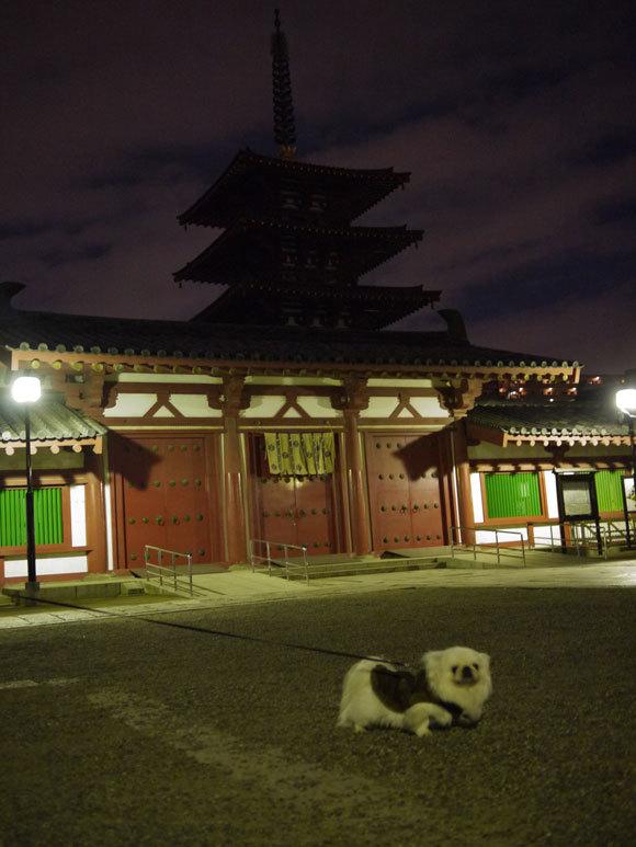 ペキニーズ Blog-白ペキニーズ シロ君のフォトブログ-シロと一緒に初詣【其の二】