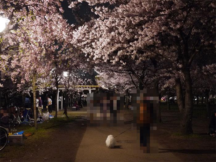 ペキニーズ Blog-白ペキニーズ シロ君のフォトブログ-2011.4.13.シロ&城