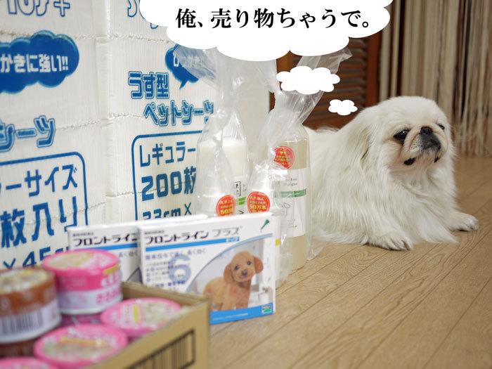 ペキニーズ Blog-白ペキニーズ シロ♂ & 白黒ペキニーズ クロ♀のフォトブログ-2011.5.23.買い物