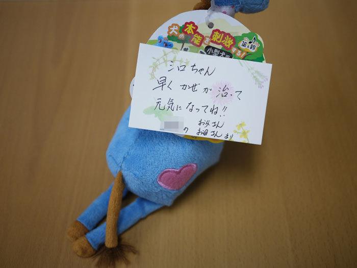 ペキニーズ Blog-白ペキニーズ シロ♂ & 白黒ペキニーズ クロ♀のフォトブログ-2011.6.11.TOY