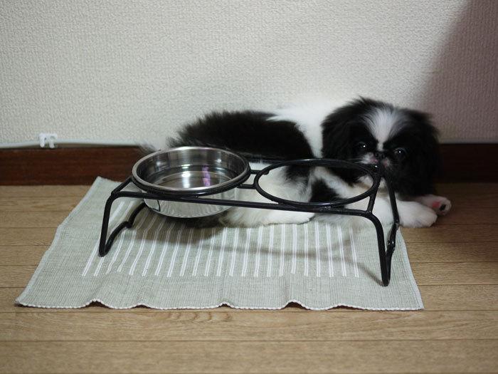 ペキニーズ Blog-白ペキニーズ シロ♂ & 白黒ペキニーズ クロ♀のフォトブログ-2011.7.20.クロ