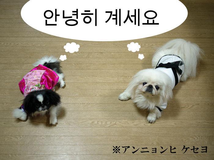 ペキニーズ Blog-白ペキニーズ シロ♂ & 白黒ペキニーズ クロ♀のフォトブログ-2011.7.30.シロクロ