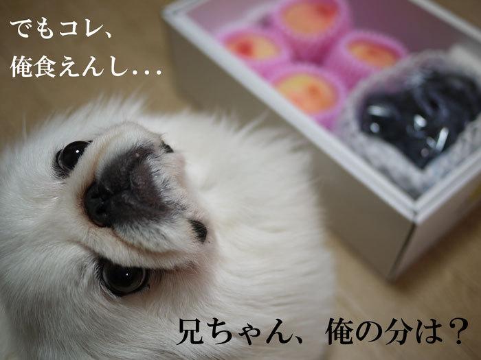 ペキニーズ Blog-白ペキニーズ シロ♂ & 白黒ペキニーズ クロ♀のフォトブログ-2011.7.29.シロ&桃&ピオーネ