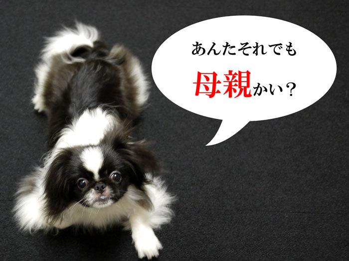 ペキニーズ Blog-白ペキニーズ シロ♂ & 白黒ペキニーズ クロ♀のフォトブログ-2011.8.4.クロ