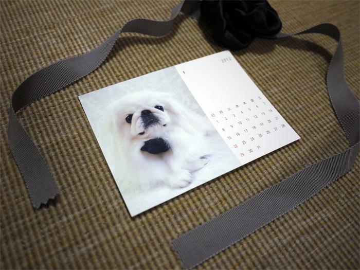 ペキニーズ Blog-白ペキニーズ シロ♂ & 白黒ペキニーズ クロ♀のフォトブログ-2011.12.31.シロ