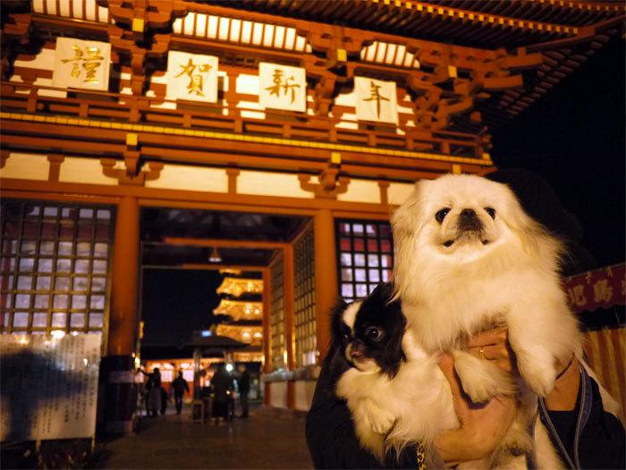 ペキニーズ Blog-白ペキニーズ シロ♂ & 白黒ペキニーズ クロ♀のフォトブログ-2012.1.1.シロクロ