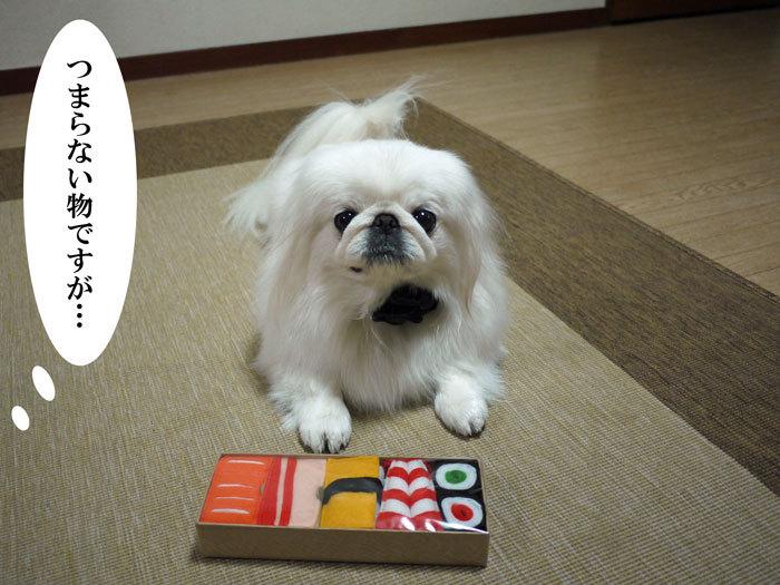 ペキニーズ Blog-白ペキニーズ シロ♂ & 白黒ペキニーズ クロ♀のフォトブログ-2012.1.19.シロ