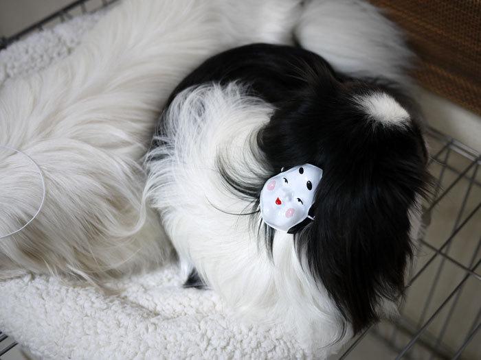 ペキニーズ Blog-白ペキニーズ シロ♂ & 白黒ペキニーズ クロ♀のフォトブログ-2012.2.3.クロ