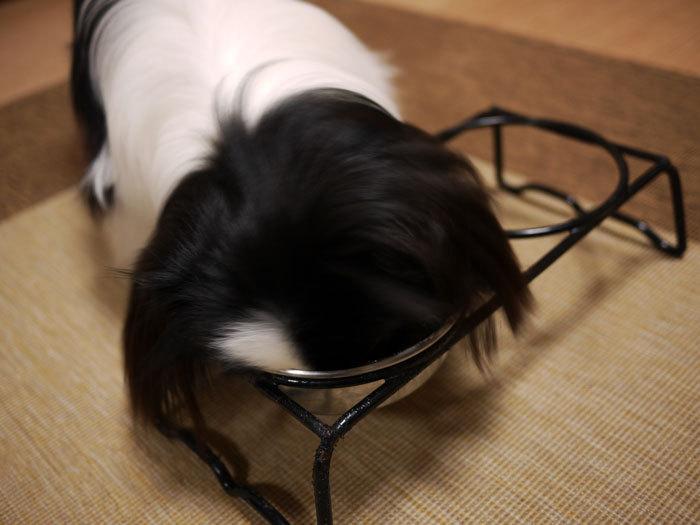 ペキニーズ Blog-白ペキニーズ シロ♂ & 白黒ペキニーズ クロ♀のフォトブログ-2012.2.22.クロ食
