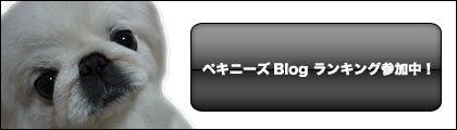 ペキニーズ Blog-白ペキニーズ シロ♂ & 白黒ペキニーズ クロ♀のフォトブログ-シロ-ランキングバナー