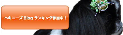 ペキニーズ Blog-白ペキニーズ シロ♂ & 白黒ペキニーズ クロ♀のフォトブログ-クロ-ランキングバナー