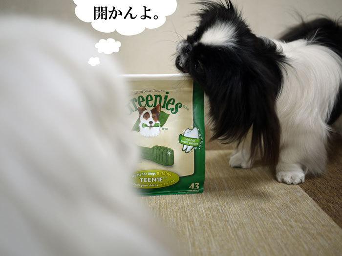 ペキニーズ Blog-白ペキニーズ シロ♂ & 白黒ペキニーズ クロ♀のフォトブログ-2012.3.22.シロクロ