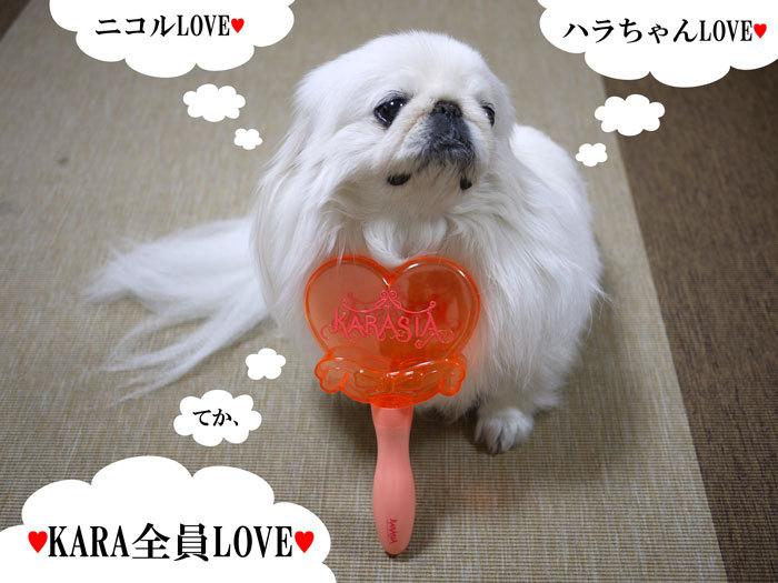ペキニーズ Blog-白ペキニーズ シロ♂ & 白黒ペキニーズ クロ♀のフォトブログ-2012.5.1.シロ