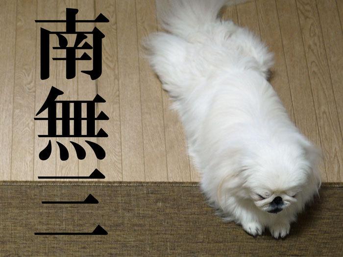 ペキニーズ Blog-白ペキニーズ シロ♂ & 白黒ペキニーズ クロ♀のフォトブログ-2012.5.21.シロ