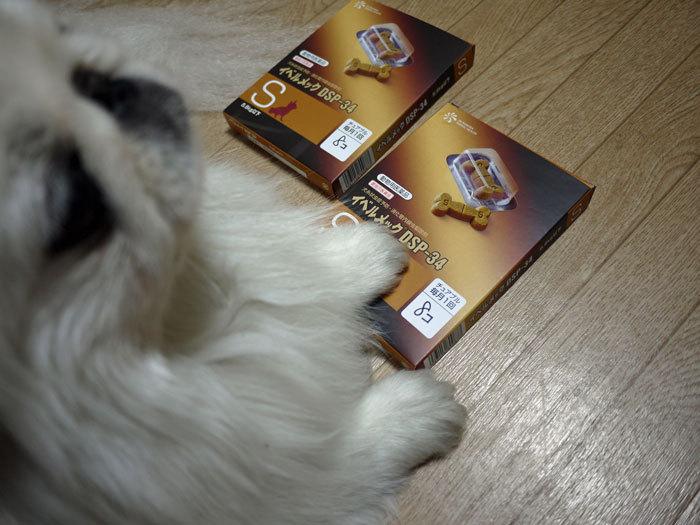 ペキニーズ Blog-白ペキニーズ シロ♂ & 白黒ペキニーズ クロ♀のフォトブログ-2012.7.2.シロ
